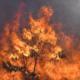 Maui Fire Burns - Photo by Matthew Thayer